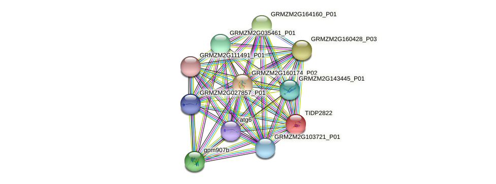 TIDP2822 protein (Zea mays) - STRING interaction network