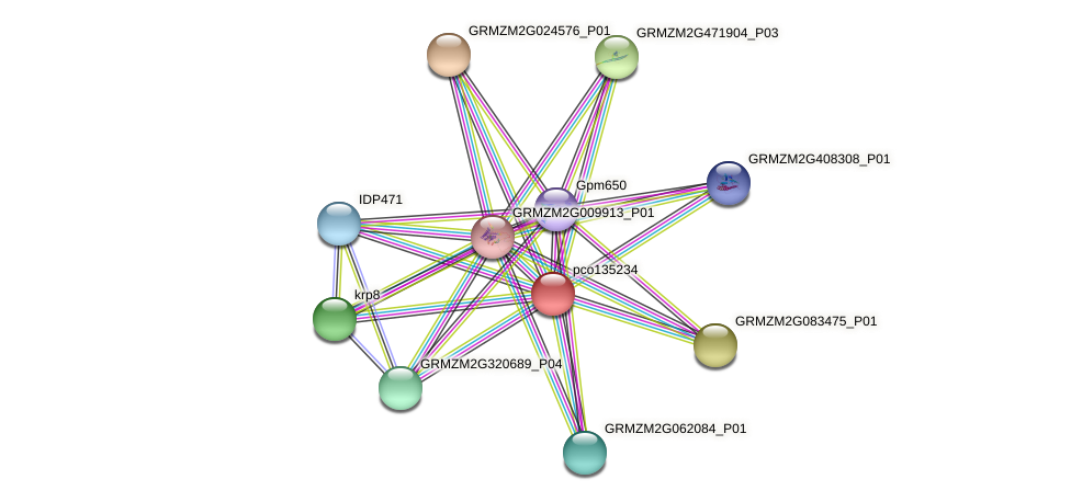 pco135234 protein (Zea mays) - STRING interaction network