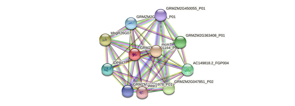 GRMZM2G001164_P01 protein (Zea mays) - STRING interaction network