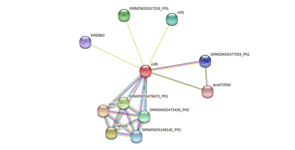 GRMZM2G001205_P01 protein (Zea mays) - STRING interaction network