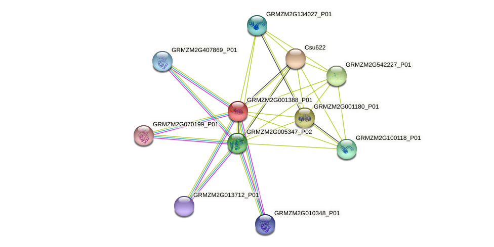 GRMZM2G001388_P01 protein (Zea mays) - STRING interaction network