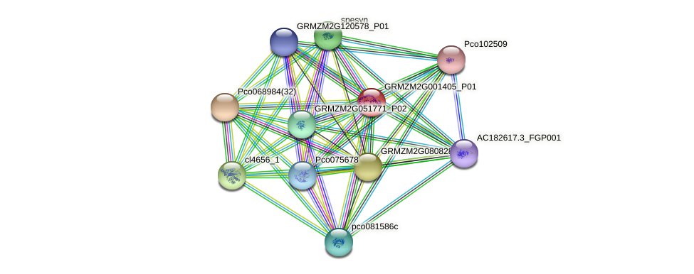 GRMZM2G001405_P01 protein (Zea mays) - STRING interaction network