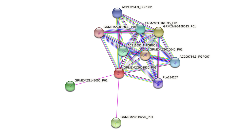Zm.37347 protein (Zea mays) - STRING interaction network