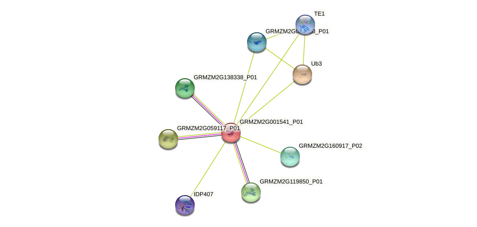 GRMZM2G001541_P01 protein (Zea mays) - STRING interaction network