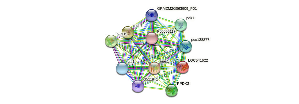 GRMZM2G001696_P01 protein (Zea mays) - STRING interaction network