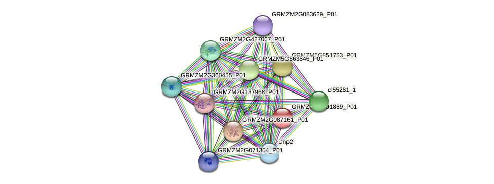 GRMZM2G001869_P01 protein (Zea mays) - STRING interaction network