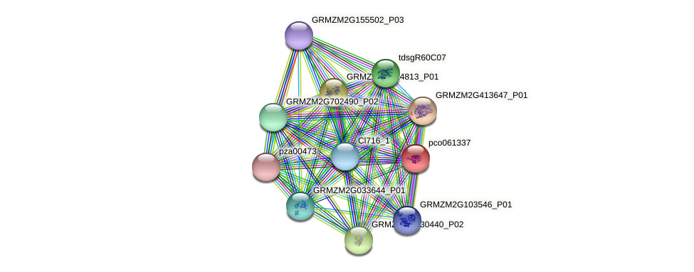 pco061337 protein (Zea mays) - STRING interaction network