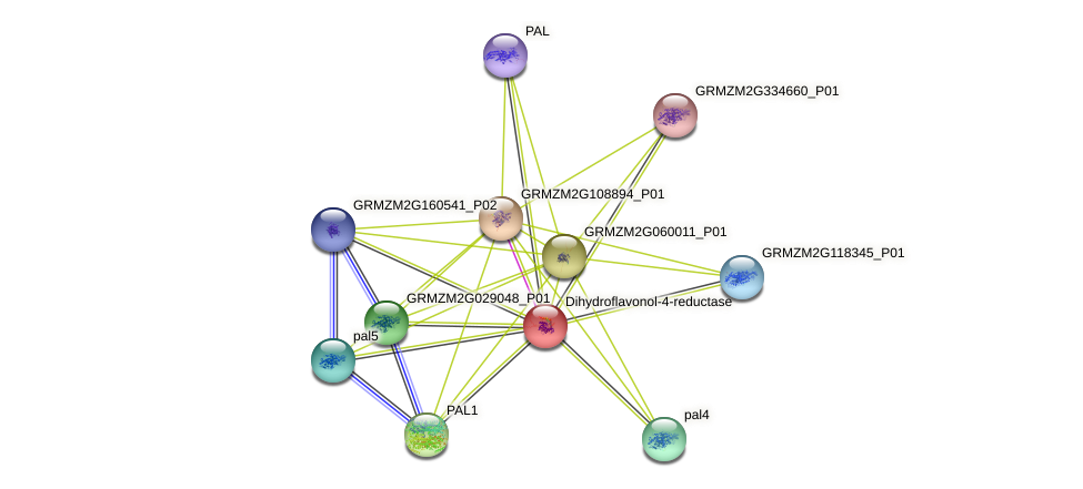 GRMZM2G001991_P01 protein (Zea mays) - STRING interaction network