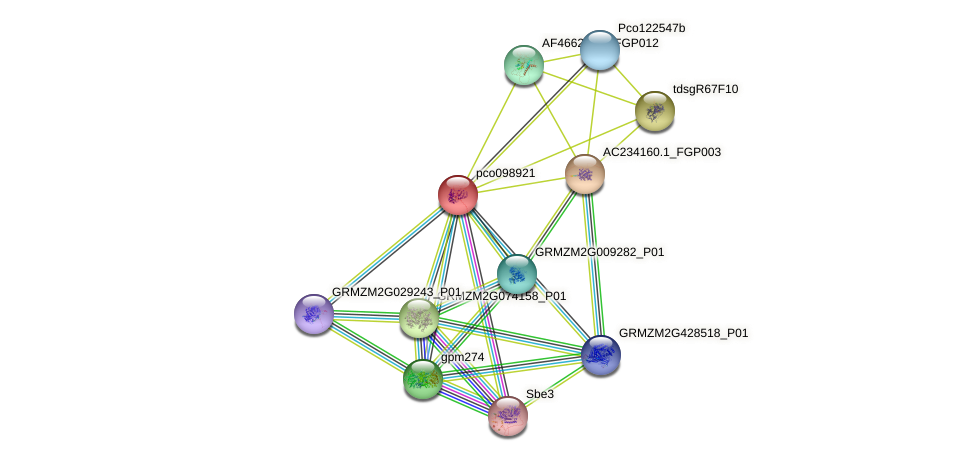 pco098921 protein (Zea mays) - STRING interaction network