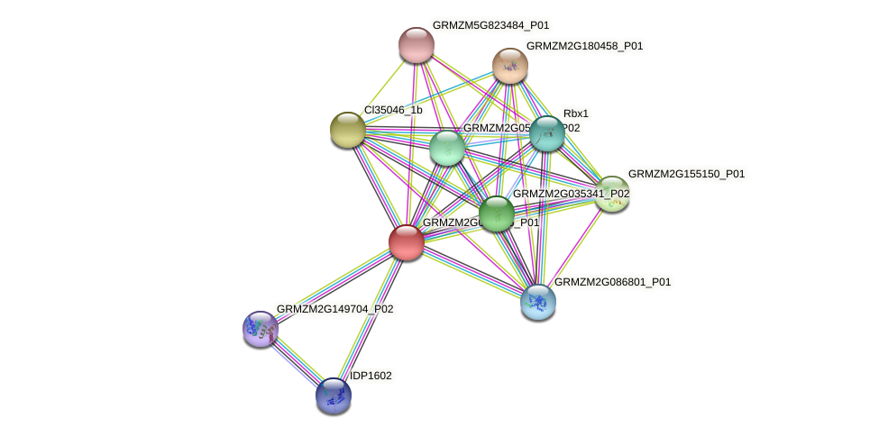 GRMZM2G002055_P01 protein (Zea mays) - STRING interaction network