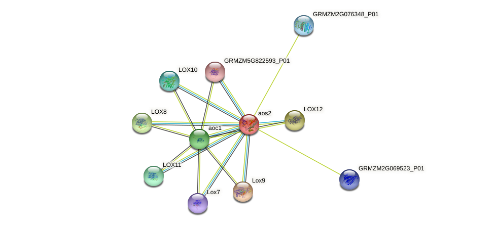 GRMZM2G002178_P01 protein (Zea mays) - STRING interaction network