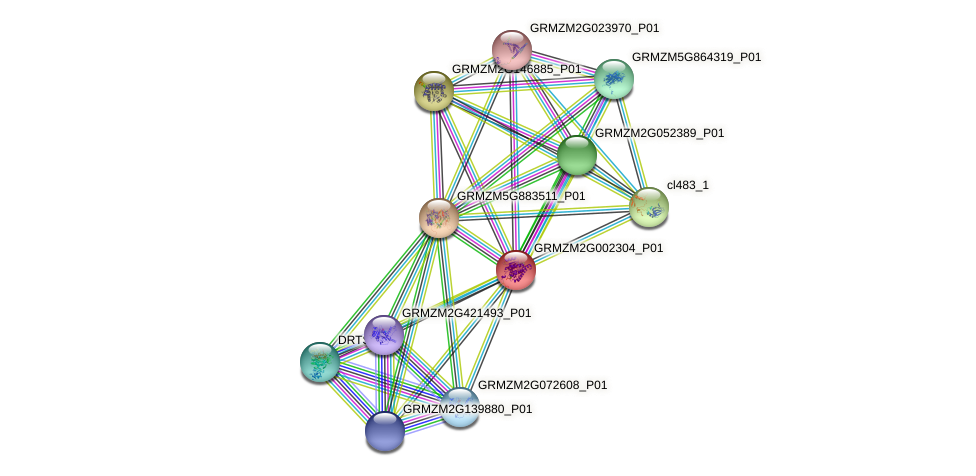 GRMZM2G002304_P01 protein (Zea mays) - STRING interaction network