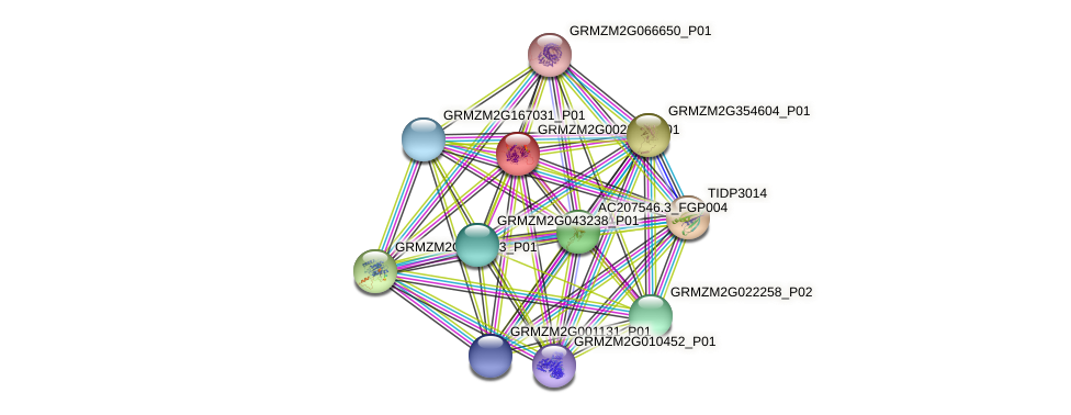 GRMZM2G002361_P01 protein (Zea mays) - STRING interaction network