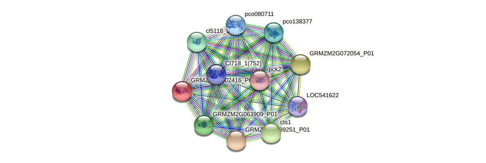GRMZM2G002416_P01 protein (Zea mays) - STRING interaction network
