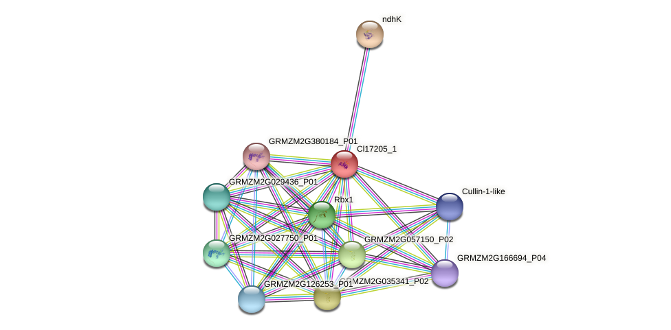 Zm.16159 protein (Zea mays) - STRING interaction network