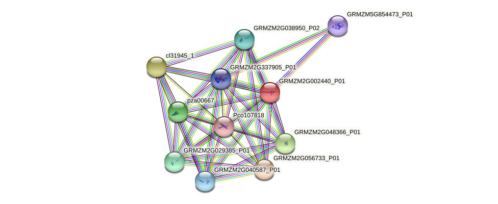 GRMZM2G002440_P01 protein (Zea mays) - STRING interaction network