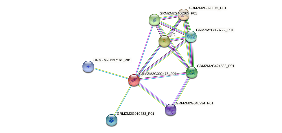 GRMZM2G002473_P01 protein (Zea mays) - STRING interaction network