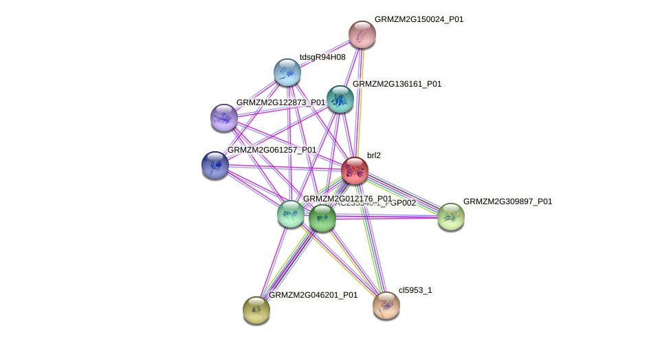 GRMZM2G002515_P01 protein (Zea mays) - STRING interaction network