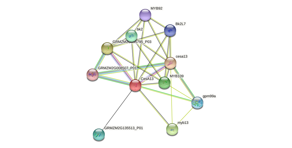 CesA13 protein (Zea mays) - STRING interaction network
