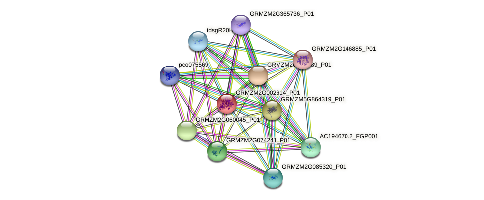 GRMZM2G002614_P01 protein (Zea mays) - STRING interaction network