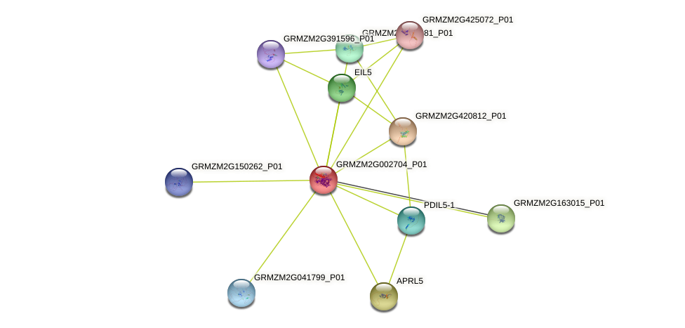 GRMZM2G002704_P01 protein (Zea mays) - STRING interaction network