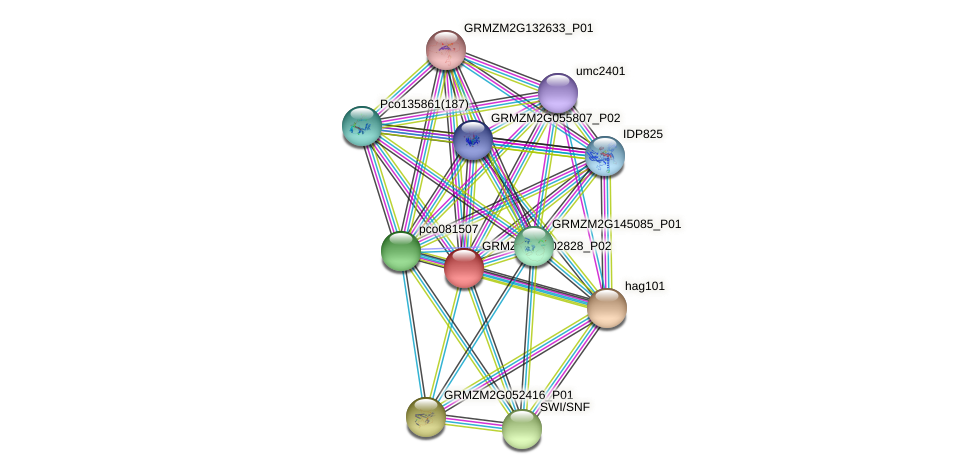 GRMZM2G002828_P02 protein (Zea mays) - STRING interaction network