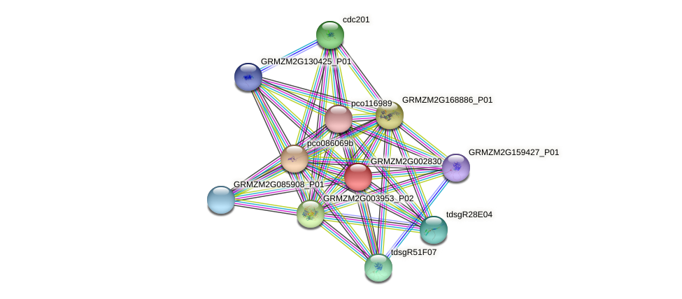 GRMZM2G002830_P01 protein (Zea mays) - STRING interaction network