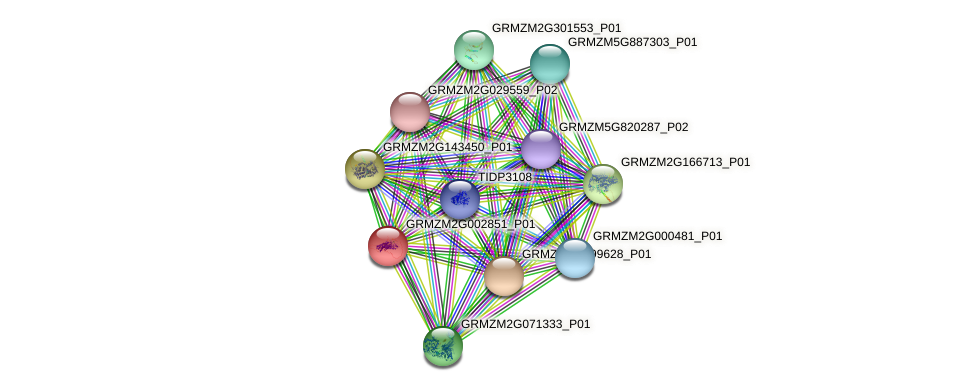 GRMZM2G002851_P01 protein (Zea mays) - STRING interaction network