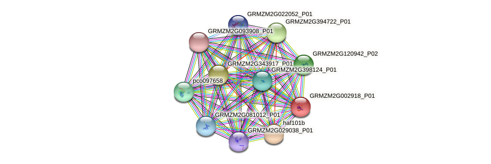 GRMZM2G002918_P01 protein (Zea mays) - STRING interaction network
