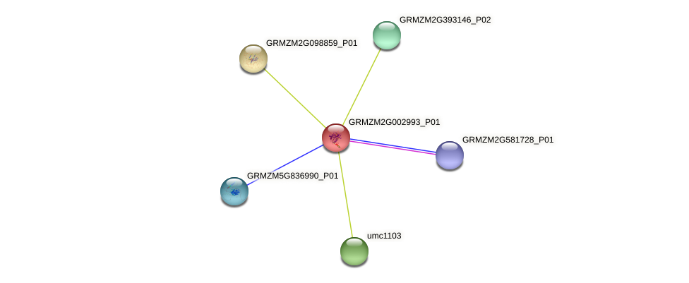 GRMZM2G002993_P01 protein (Zea mays) - STRING interaction network