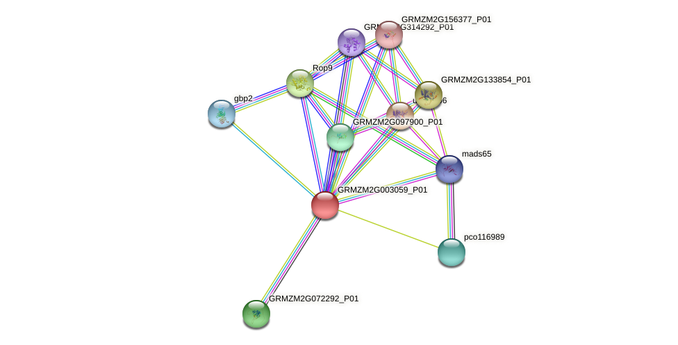 GRMZM2G003059_P01 protein (Zea mays) - STRING interaction network