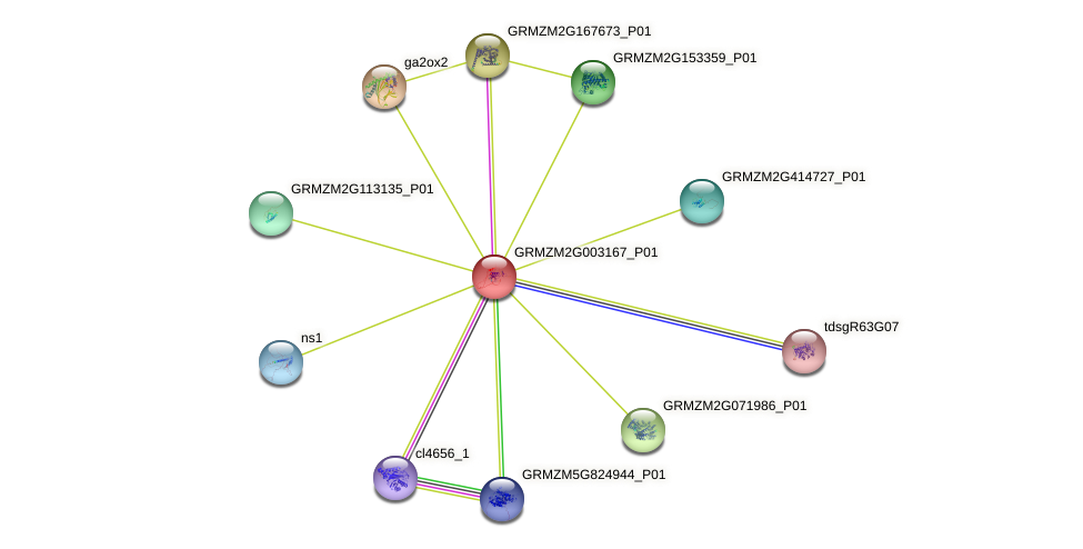 GRMZM2G003167_P01 protein (Zea mays) - STRING interaction network