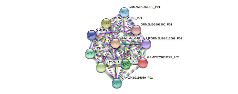 GRMZM2G003225_P02 protein (Zea mays) - STRING interaction network