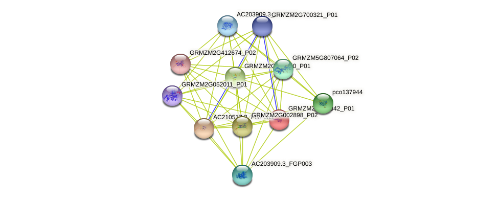 GRMZM2G003342_P01 protein (Zea mays) - STRING interaction network