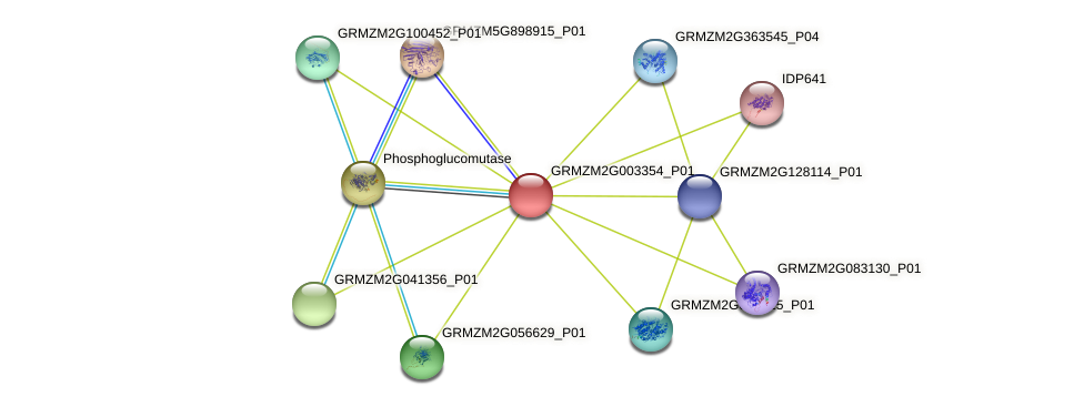 GRMZM2G003354_P01 protein (Zea mays) - STRING interaction network
