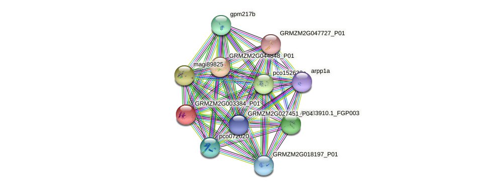 GRMZM2G003384_P01 protein (Zea mays) - STRING interaction network