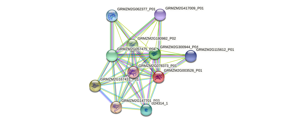 GRMZM2G003526_P01 protein (Zea mays) - STRING interaction network