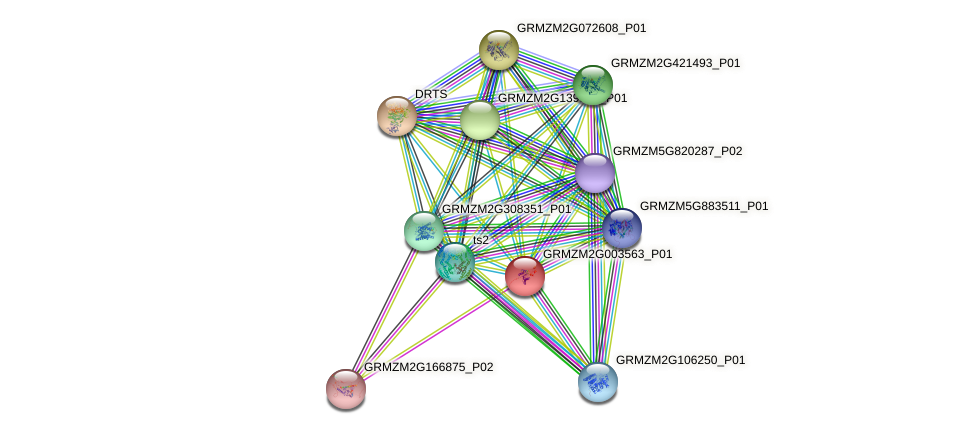 GRMZM2G003563_P01 protein (Zea mays) - STRING interaction network