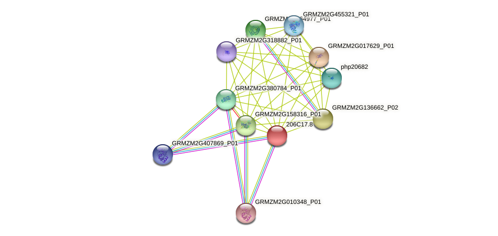100384031 protein (Zea mays) - STRING interaction network