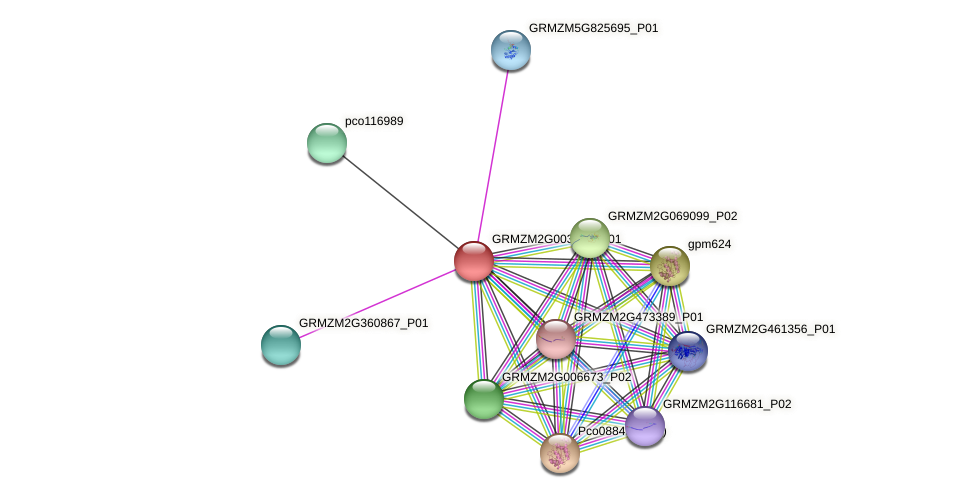 Zm.83255 protein (Zea mays) - STRING interaction network