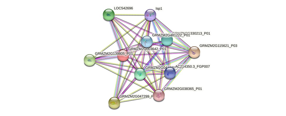 GRMZM2G003642_P01 protein (Zea mays) - STRING interaction network