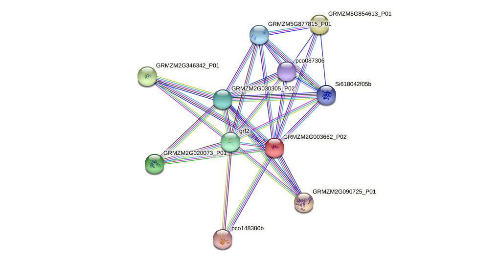 GRMZM2G003662_P02 protein (Zea mays) - STRING interaction network