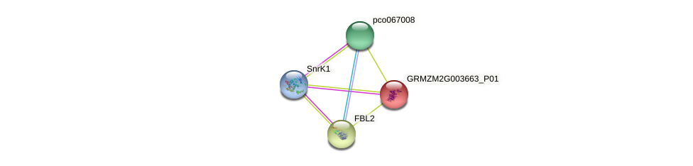 GRMZM2G003663_P01 protein (Zea mays) - STRING interaction network