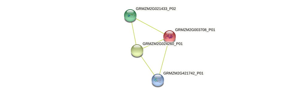 GRMZM2G003708_P01 protein (Zea mays) - STRING interaction network