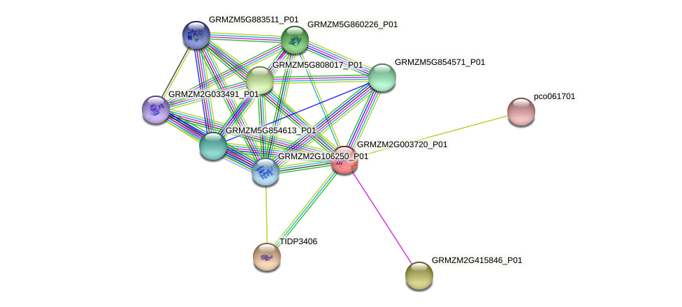 Zm.28579 protein (Zea mays) - STRING interaction network