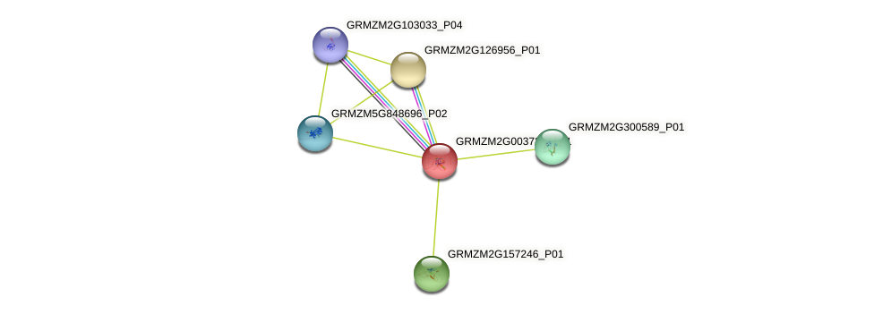 GRMZM2G003725_P01 protein (Zea mays) - STRING interaction network
