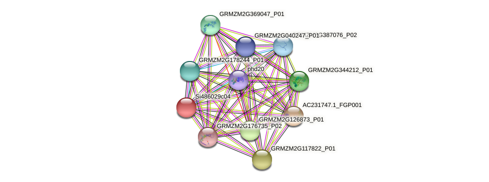 GRMZM2G003734_P01 protein (Zea mays) - STRING interaction network