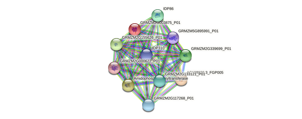 GRMZM2G003875_P01 protein (Zea mays) - STRING interaction network