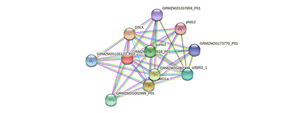 GRMZM2G003916_P01 protein (Zea mays) - STRING interaction network
