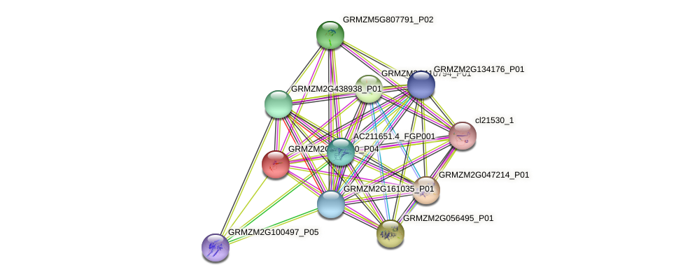 GRMZM2G003930_P04 protein (Zea mays) - STRING interaction network